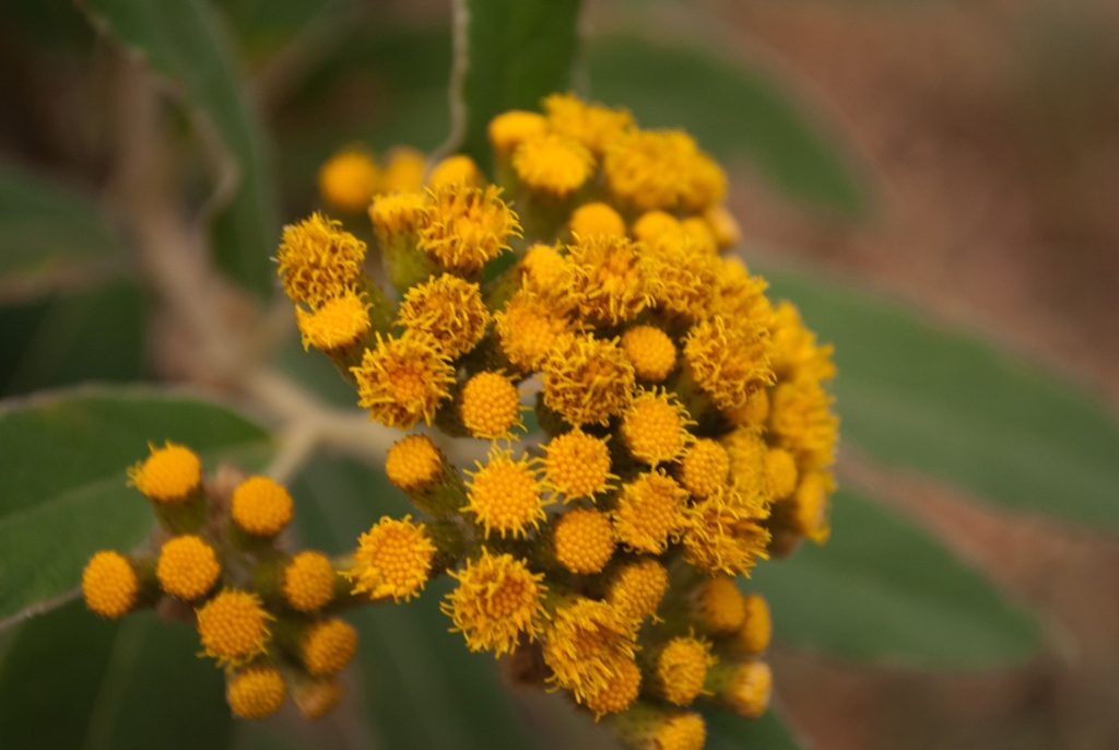 Beautiful flora to be seen at Sattal lake
