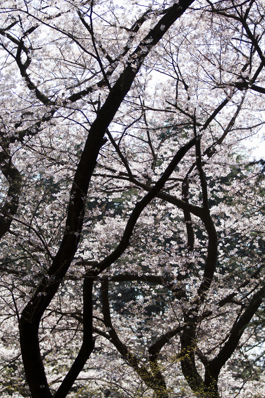 Hanami 2017 Preview