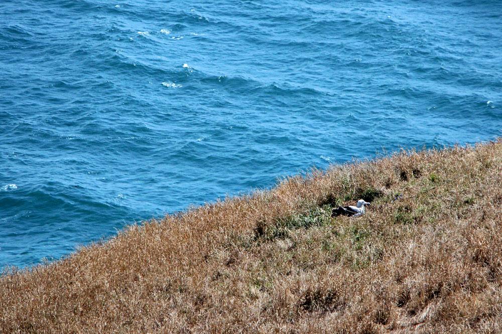 Royal Albatross Centre, Otago Peninsula, Dunedin