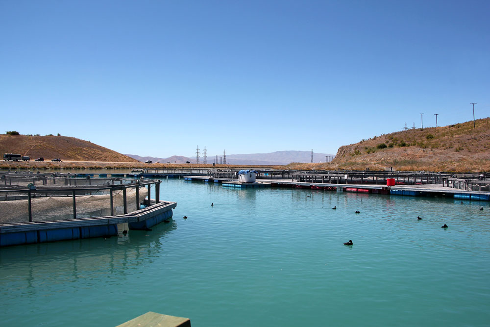 High Country Salmon Farm, New Zealand