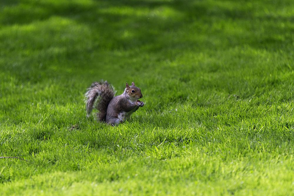 Squirrel at Royal Botanic Garden Edinburgh
