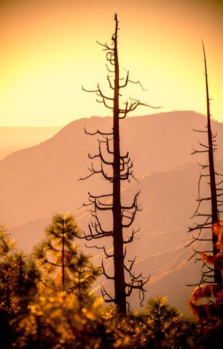 Yosemite-2016-(C2)-70