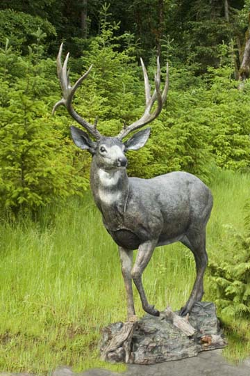 A life sized bronze sculpture of a mule deer, pictured in front of grass and forest.