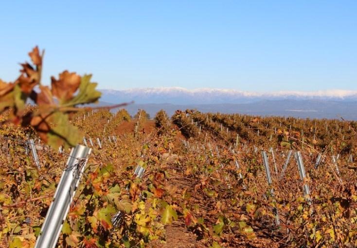 vineyardsAndMountainsConstancia