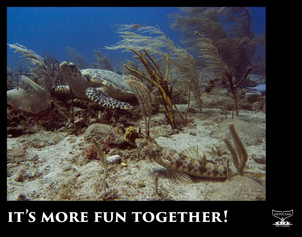 """It's more fun together"" written on black frame below a picture of a turtle and fish hanging out together"