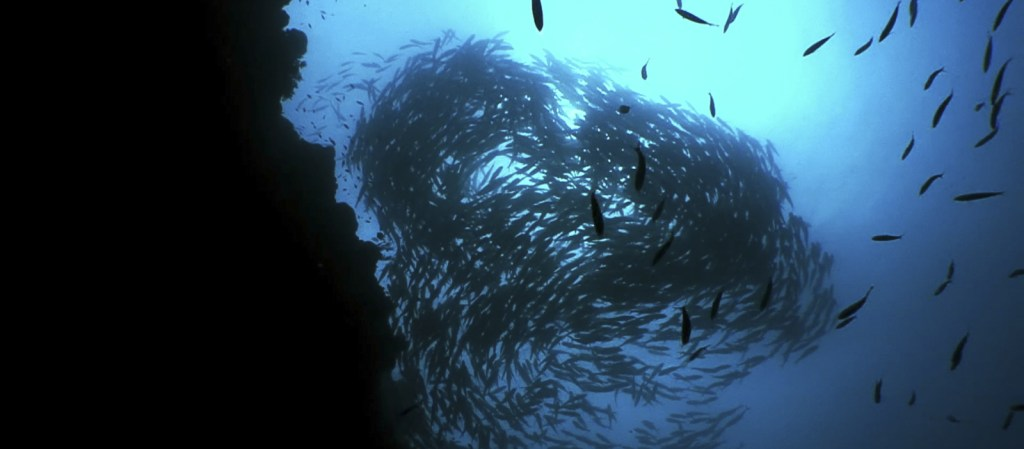 "Screenshot from video clip ""Reef of the visayas"" with fish schooling into a heart shape."