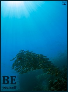 Postcard Warm regards from Devocean Pictures: Underwater wide-angle picture in the shallows with natural light only. Sunburst coming through to illuminate small school of snappers with one red-tooth triggerfish in between. Text: Be yourself.