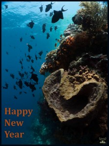 Postcard Warm regards from Devocean Pictures: Underwater wide-angle shot with natural light only showing sponge in heart shape and school of red-tooth triggerfish. Text: Happy New Year.