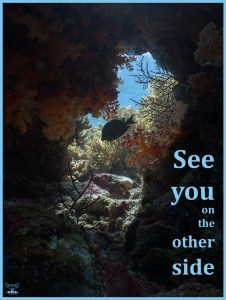 Postcard Warm regards from Devocean Pictures: Underwater look-through with soft corals and fish looking onto reef top in sunlight. Text: See you on the other side.