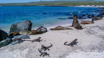 Beach on Galapagos Islands with sea lions and iguanas overlooking the sea and the blue sky