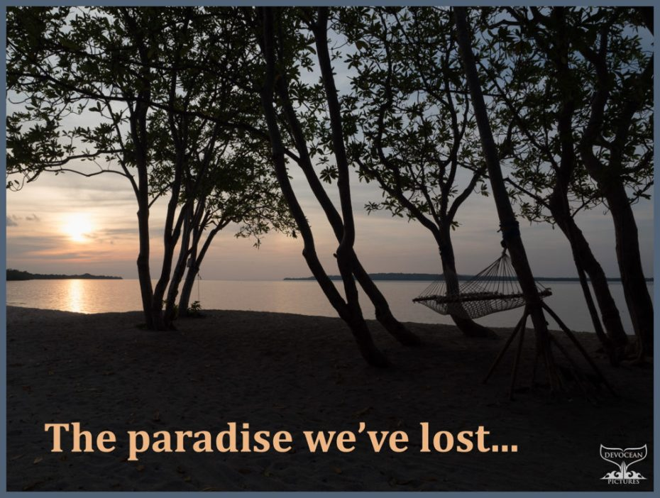 Sillhoute of trees with hammock on beach overlooking the sea at sun rise. Text: The paradiese we've lost.
