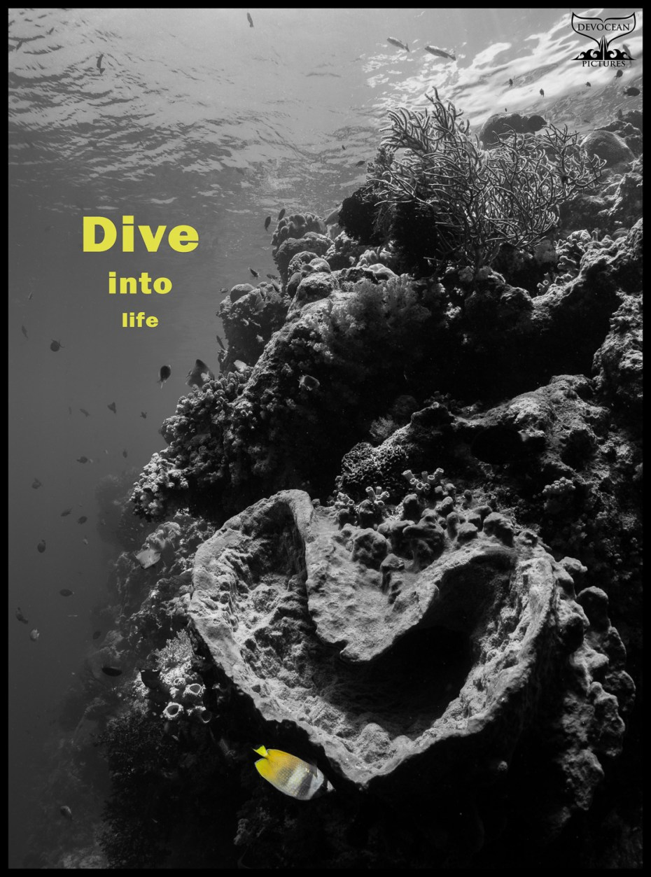 """Postcard with warm regards from Devocean Pictures: Underwater wide-angle shot with natural light only at the house reef of Wakatobi (Indonesia). Reefscape with heart-shaped sponge in black and white, only a little butterflyfish at the tip of the sponge in yellow as well as the text """"Dive into life"""""""