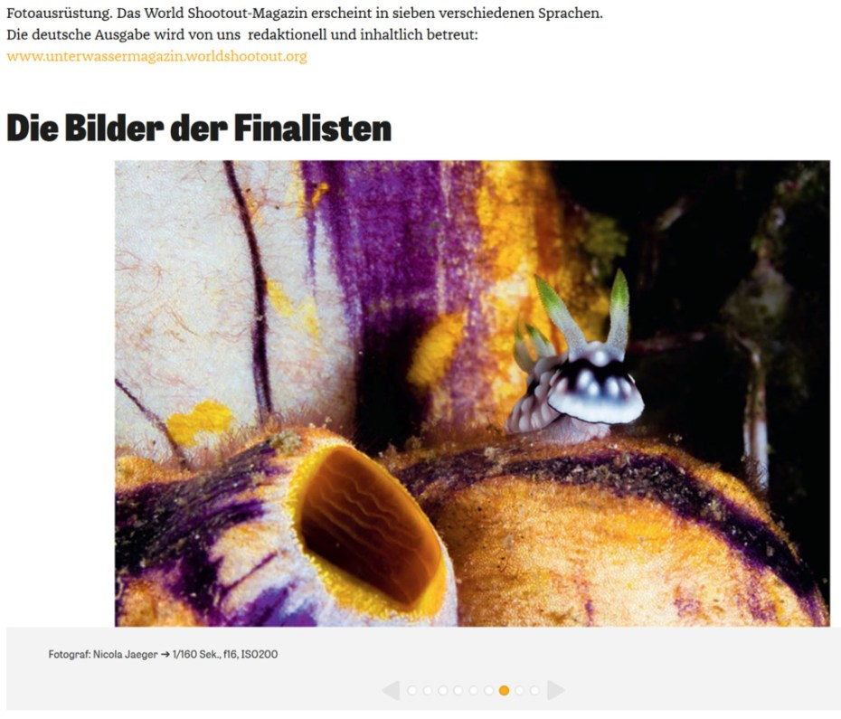 """Showing the picture that made it into the final of uw contest. It is a screenshot from the website of """"Unterwasser - Dein Tauchmagazine"""" featuring the photo of nudibranch (Goniobranchus geometricus) sitting on top of a colourful solitary tunicate."""