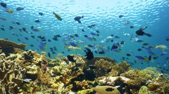Healthy and diverse coral reef of Wakatobi, Indonesia
