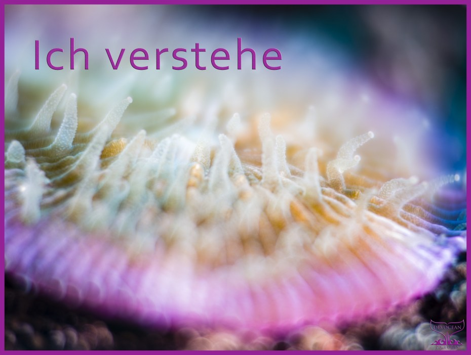 """Underwater close-up of mushroom coral with whitish polyps extended. Rim in pink to purple blur. Prepared as postcard """"Ich verstehe"""" and logo of Devocean Pictures."""