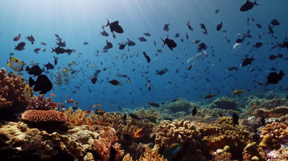 """Screenshot of the video take a minnute to relax """"coral reef protection"""" showing a sunlit reef top with diverse andd colourful corals teeming with fish. Filmed at Fan 38 at Wakatobi Dive Resort, Indonesia."""