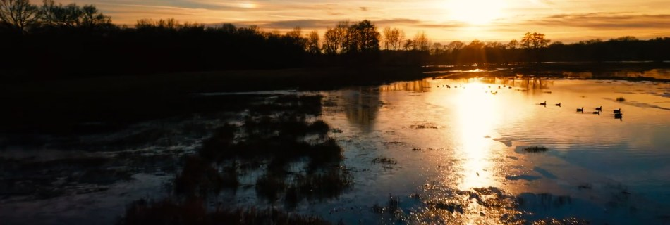 Screenshot of the moores of Drenthe, the Netherlands. Take a Minute to Fly: Showing a swamp with ducks passing by into a sunset with trees silhoueting.