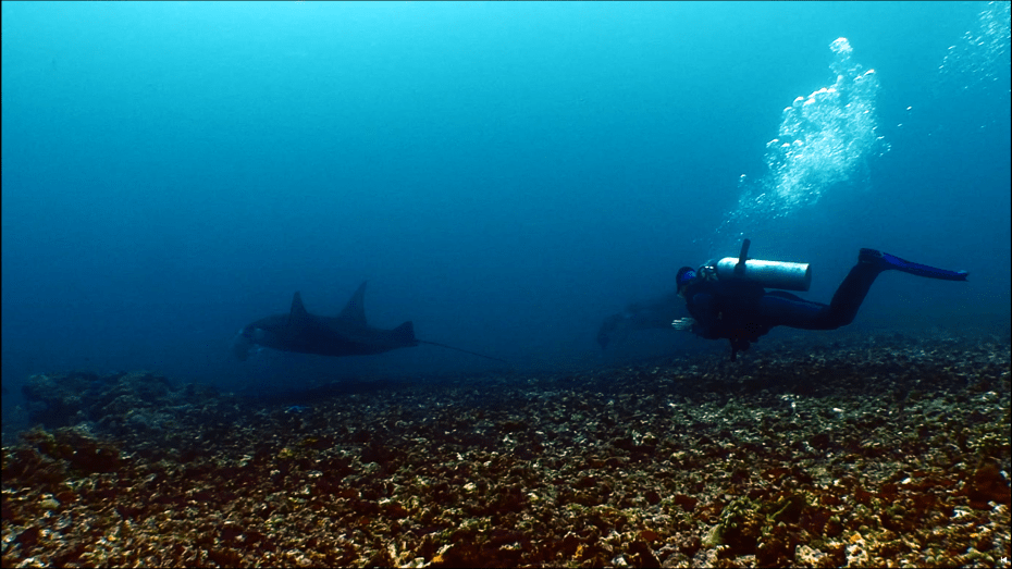 Screenshot of one of the clips Yoeri filmed with mantas 2015-2016 in Komodo (Indonesia): Nicki (diver) hovering above the rubble ground at Manta Point with two mantas silhouetting behind her.