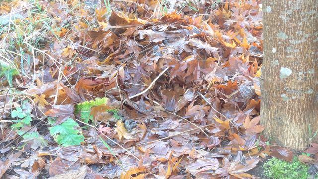 hedgehog nest