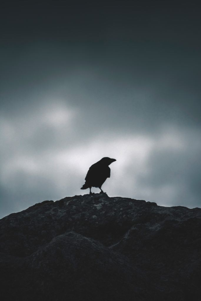 Quoth the Raven - Photo by Sergio Ibanez on Unsplash
