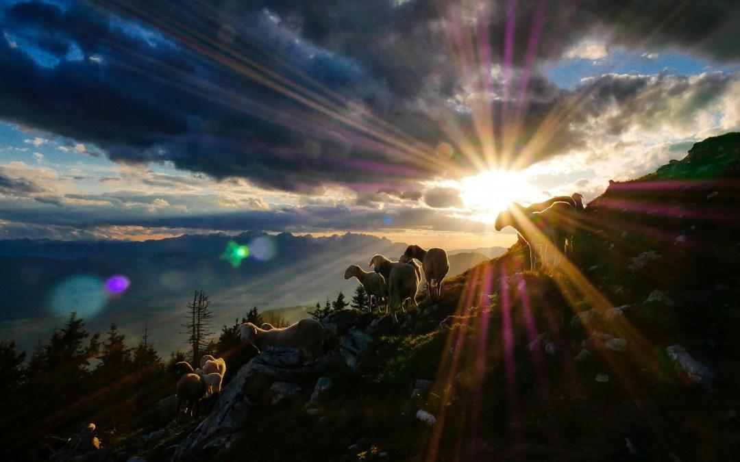 Daily Devotion – Celebrating the Wonder of Christmas