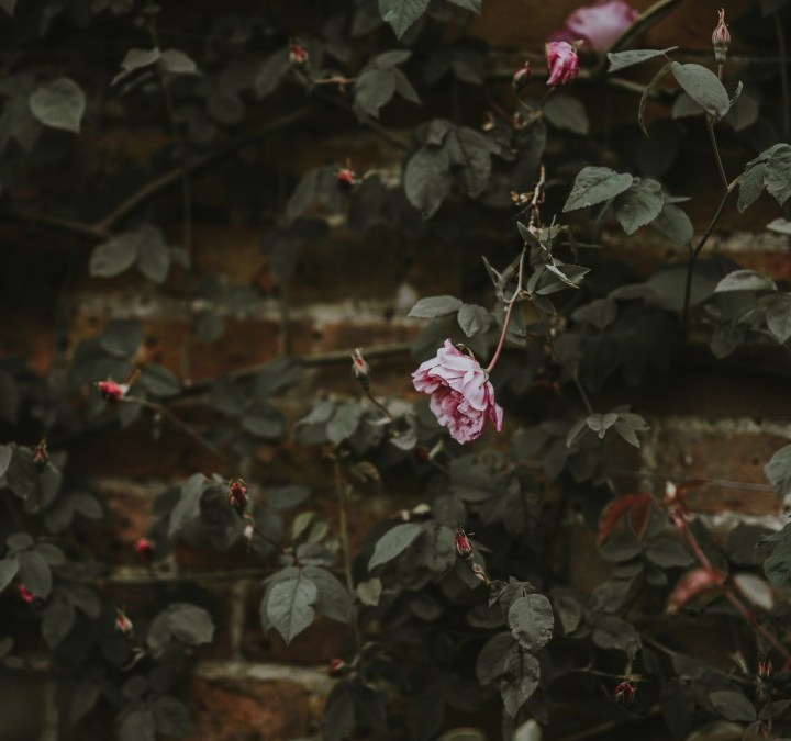 Daily Devotion – The Thorns Are Worth It