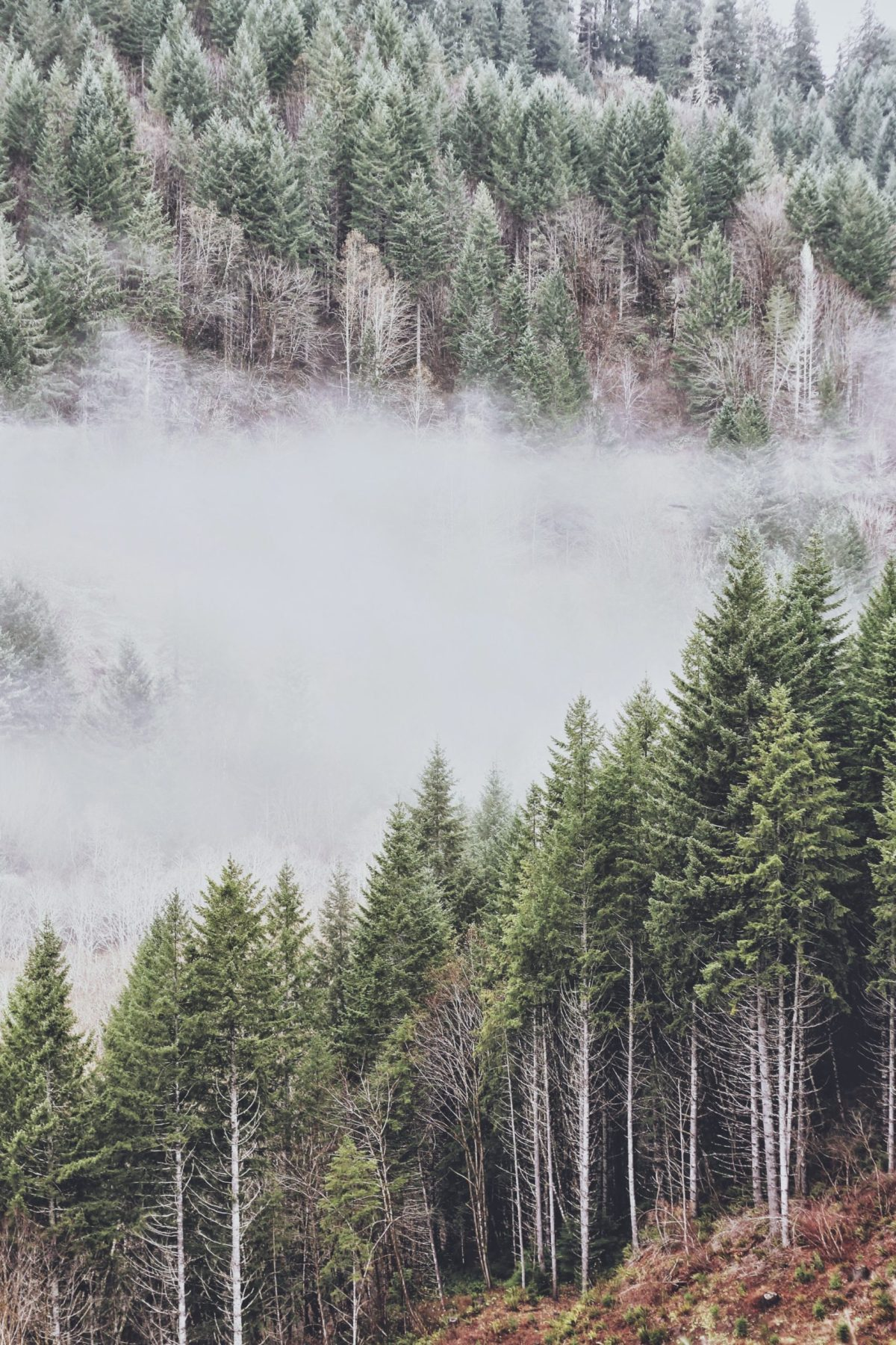 Wintery Landscape, an aerial view of evergreen trees with mist and snow