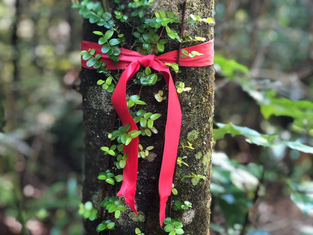 A close up of a tree trunk with a red ribbon tied around it. Green leaves are growing on the trunk.