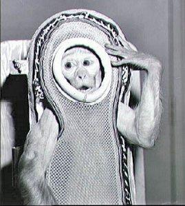 monkey wikipedia public domain