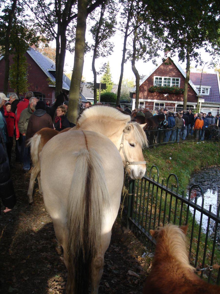 zuidlaardermarkt Horse fair art 45