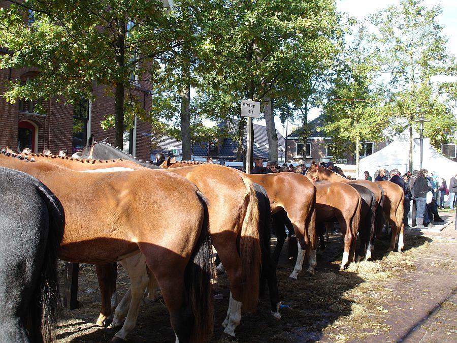 zuidlaardermarkt Horse fair art 60