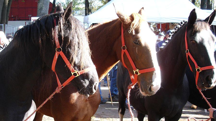 zuidlaardermarkt Horse fair art 63