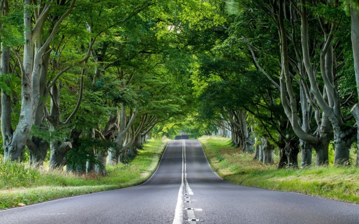 road-through-the-forest-nature-hd-wallpaper-1920x1200-34861.jpg