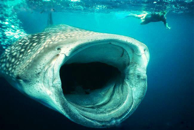 50+ Jenis Ikan Laut Dalam yang Aneh, Menyeramkan, dan Langka