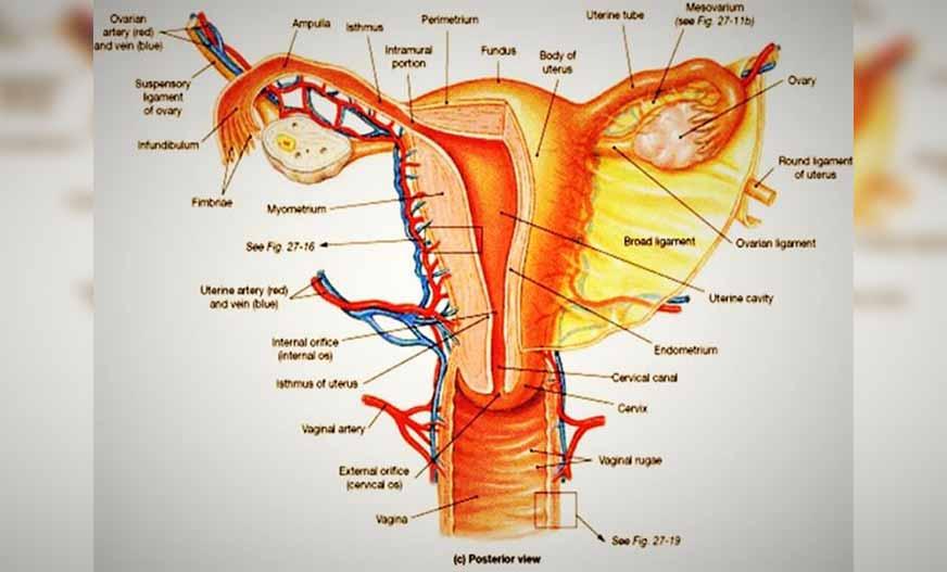 Cara Menjaga Kesehatan Alat Reproduksi Wanita Dengan