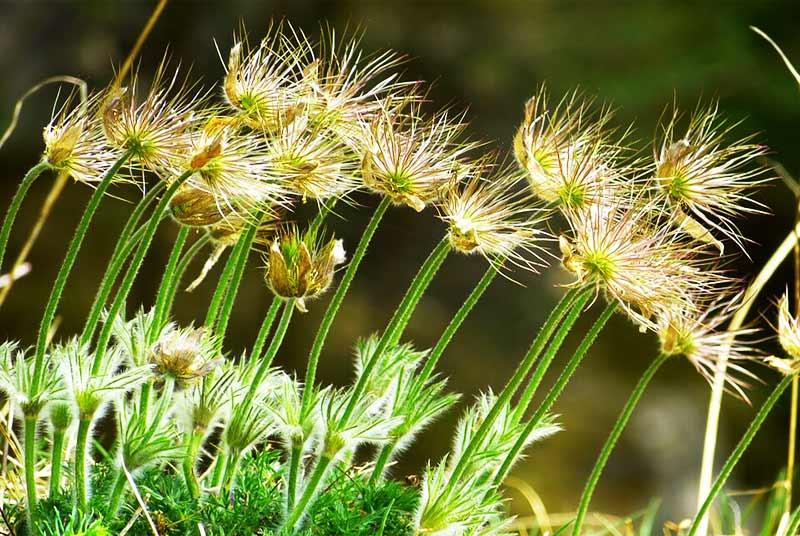 Pengertian Lingkungan Hidup Lengkap Unsur Unsur Lingkungan Hidup