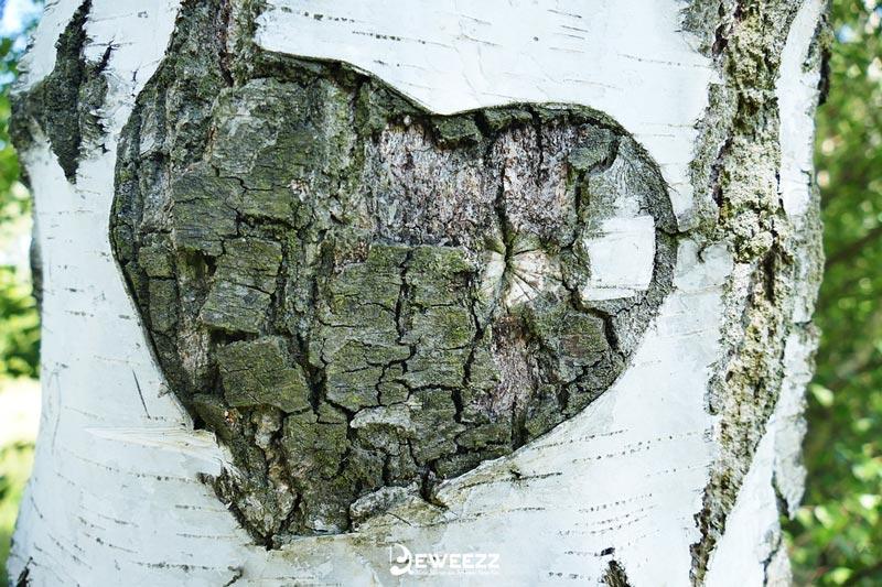 25 Kumpulan Contoh Puisi Cinta Paling Romantis Se Dunia Dan Spesial