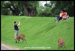 Photographers in action at Royal Natal
