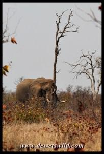 Elephant, S131 road