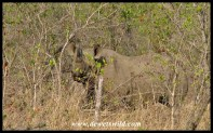 Black Rhino (3)