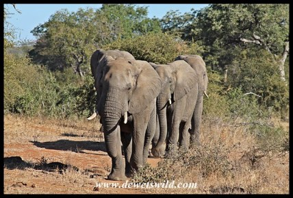 Elephant, Girivana