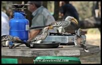 Unusual breakfast guests at Afsaal Picnic Spot
