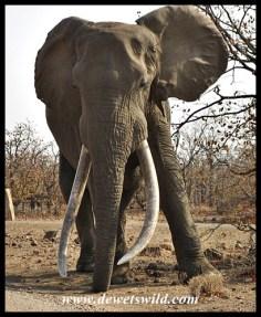 Hlanganini (of Kruger)