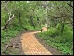 Ntshondwe walkway