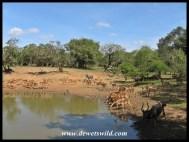 Rush hour at Kumasinga
