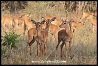 There seemed to be impala lambs around every corner at uMkhuze