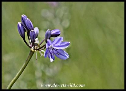 Floral splendour at Golden Gate Highlands National Park