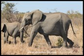 We encountered this herd of elephants on the way back to camp