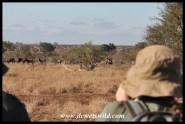 Enjoying wildlife along the way
