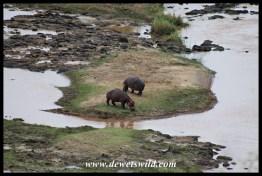 Hippos from N'wamanzi Viewpoint
